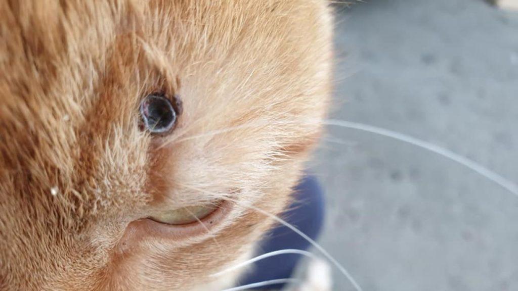 Kto strzela do zwierząt w Sieniawie Żarskiej? 1