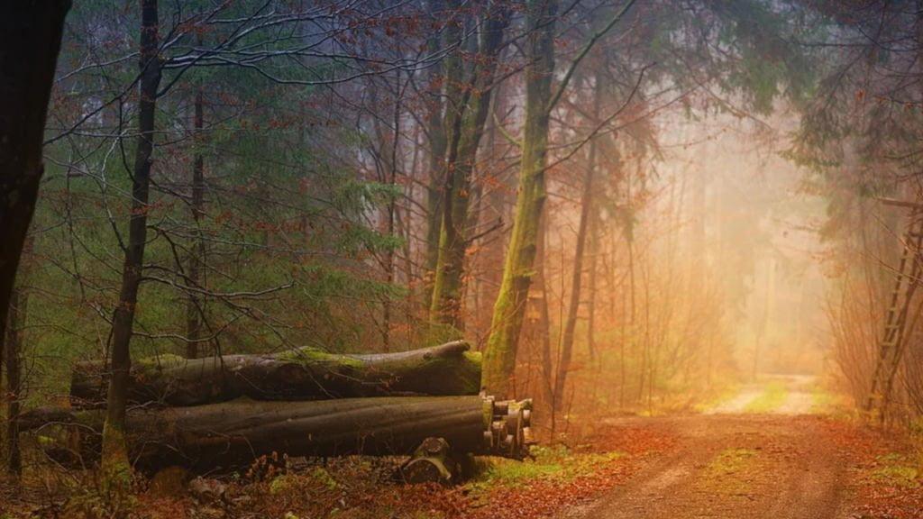 Posadź własny las i weź pieniądze. Ostatni moment na złożenie wniosku 1