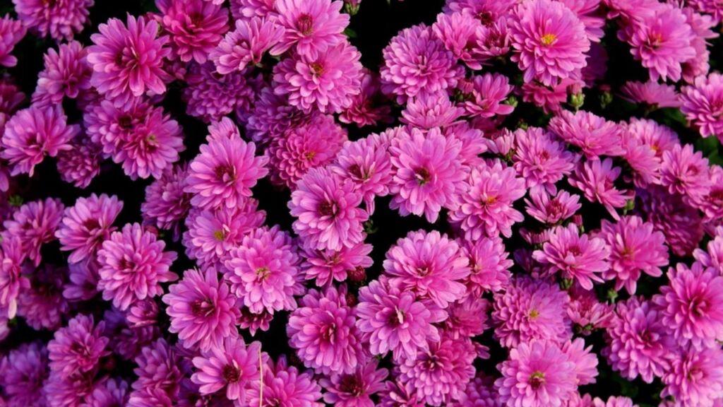 Zielona Góra odkupi niesprzedane kwiaty.