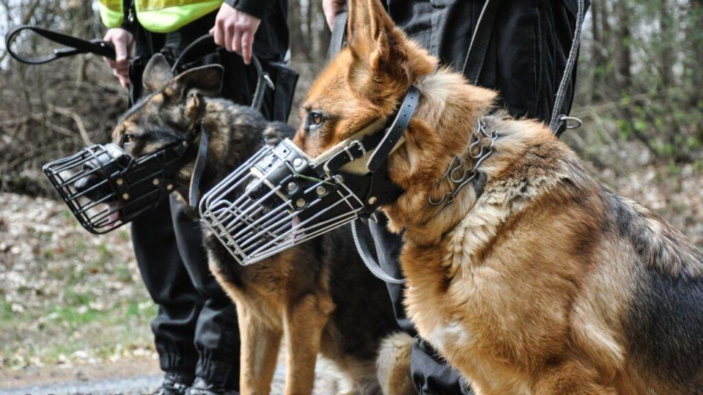 Gorzów Wlkp: Pies pomógł odnaleźć zaginionego 86-latka