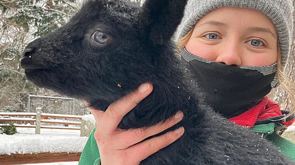 """Młodziutka owca pomorska """"Lotte"""" przyszła na świat w Naszym Zoo"""