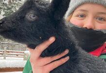 Uczennica Antonia Kolar z owieczką Lotte