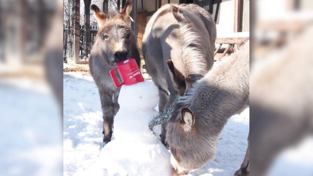 Nie zgadniesz co robią zwierzęta w zoo w wolnym czasie! Podaj marchewkę i patrz!