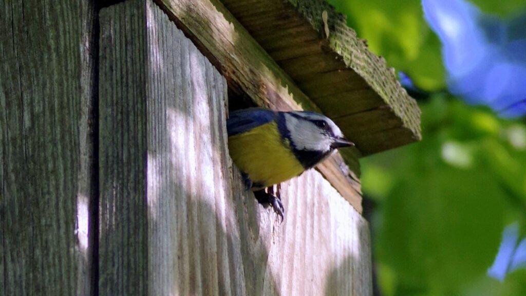 Montujemy budki lęgowe dla ptaków śpiewających