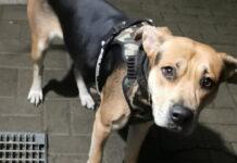 Pies porzucony w Kożuchowie